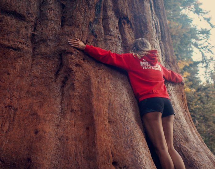 sequoia narodny park